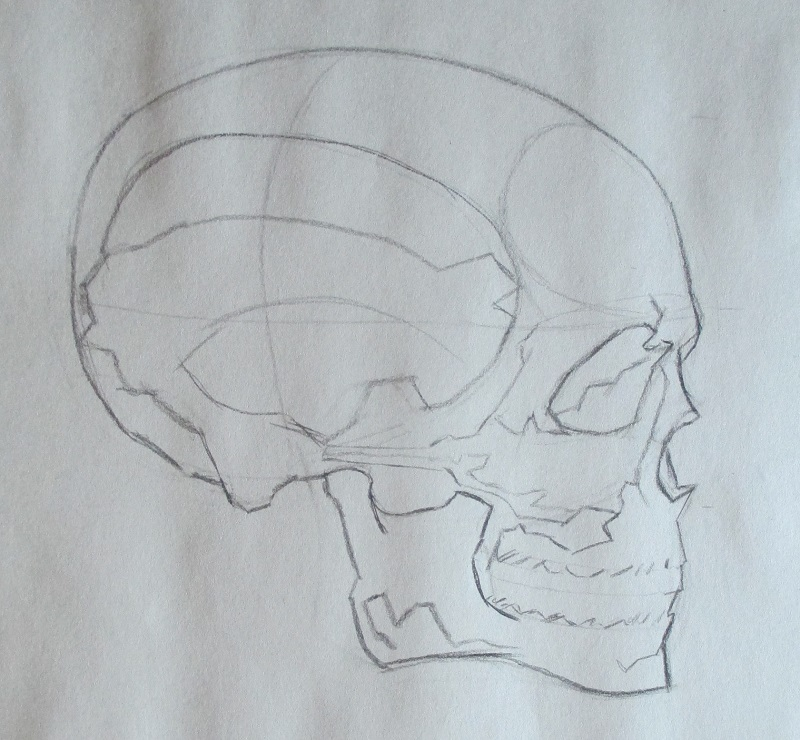 Watts-Head-Skull-Profile-1.jpg